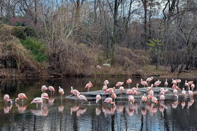 Сорок пять фламинго Фламинго