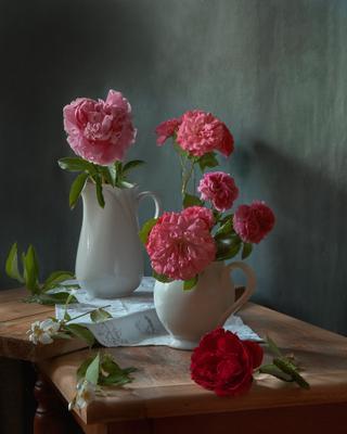 Пион... натюрморт цветы