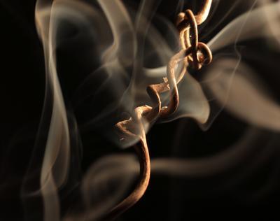 Симбиоз виноградной лозы и дыма. Шаварёв природа фотография