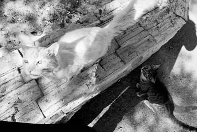 где-то я тя видел... котовый наезд