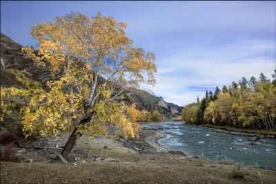 Алтайские зарисовки. Осень на Чуе Река чуя береза камни облака осень