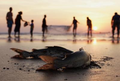 Ловись, рыбка... рыбаки, закат, Северный Гоа