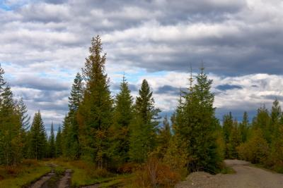 Налево пойдешь... Дороги лес небо облака
