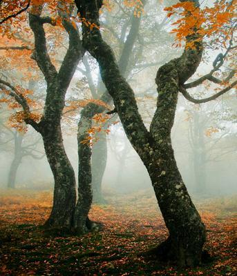 ***Осенний вальс Осень грабы туман
