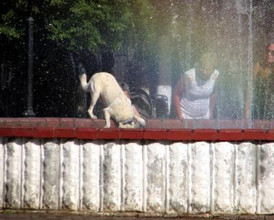 Всем жарко... лето жарко город собака фонтан
