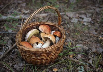 грибы грибы
