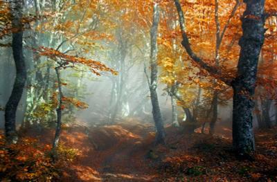 ***В эльфийском лесу Дорога осень утро туман лучи света