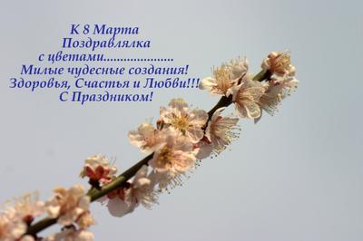 К 8 Марта Поздравлялка с цветами....сакура.... Милые чудесные создания!  Здоровья, Счастья и Любви!!!  С Праздником! К 8 Марта Поздравлялка с цветами....сакура.... Милые чудесные создания!  Здоровья, Счастья и Любви!!!  С Праздником!