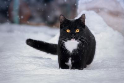 Первый снег в жизни Уголька. кот глаза взгляд свет цвет портрет день животные фон боке снег