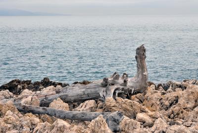 ... и чьи-то неизвестные останки валялись на скалистом берегу... останки берег море скалы Антибы