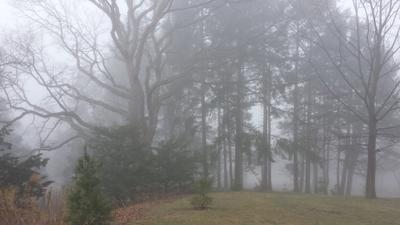 5 утро лес туман