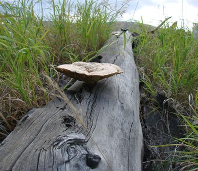 ***Пищевая цепочка Тунлрва дерево грибы