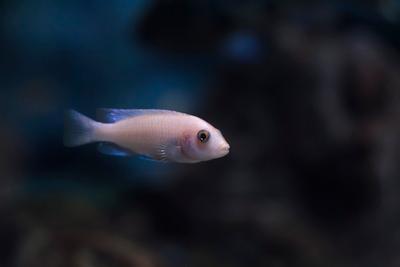 хрупкая натура рыбка хрупкая натура