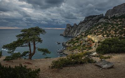 *** Крым Новый Свет берег море черное можжевельник облака вечер