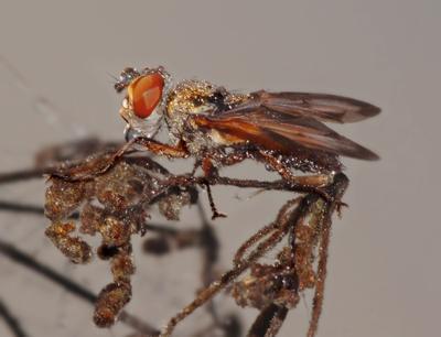 Беспробудное пробуждение муха сон роса
