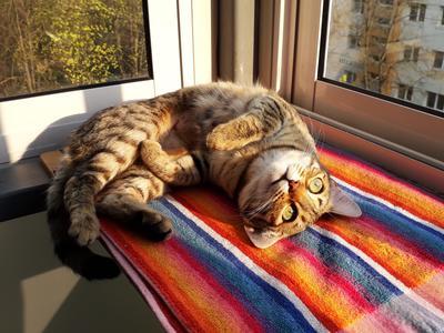 Солнышко кошки