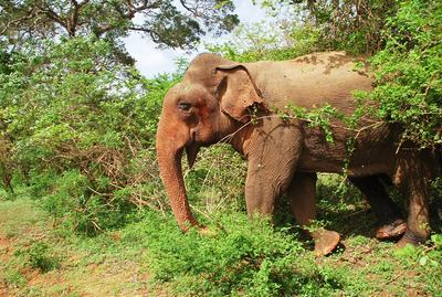 Слон и джунгли слон джунгли