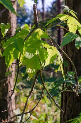 А я иду,шагаю по ... листве. Лес листья веточка