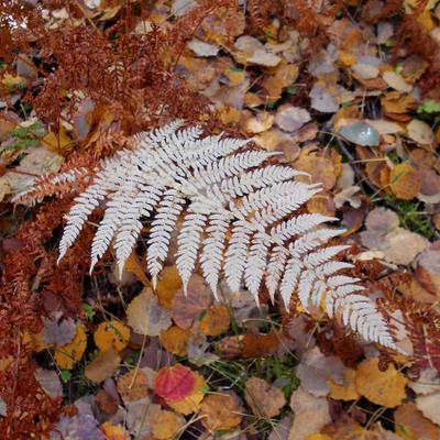 лист резной лес осень