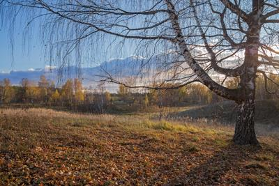 *** природа пейзаж осень вечер береза урняк татарстан