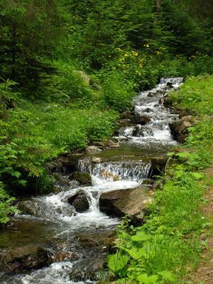 поток из Синевира поток Карпаты озеро Синевир