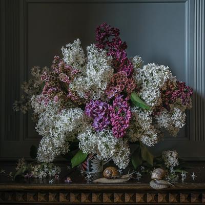Сирень и улитки натюрморт цветы сирень улитки