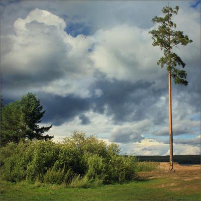 Одиночество.. пейзаж сосна тучи ветер