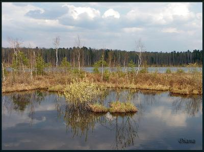 Весеннее настроение озеро весна облака тучи болотные кочки жухлая трава отражение в воде зеленые побеги