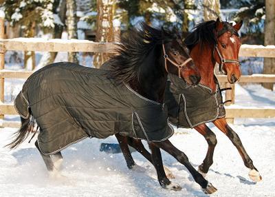 кони в пальто :) кони, пальто