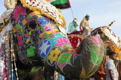 color elephant India Jaipur color elephant holi