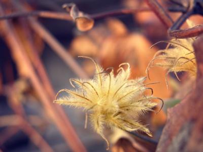 Осень осень, листва, цветы, лоза, сухоцветы