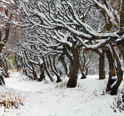После снегопада... Покровское Стрешнево