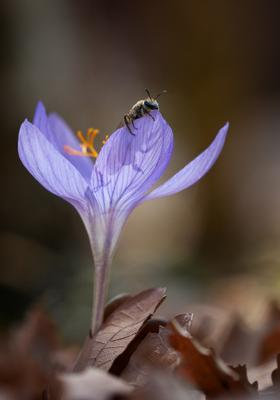 Кто там?))) осень, цветок, пчела