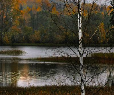 Дождливый октябрь Estonia Эстония akaasik