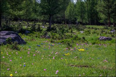 Июньская высокогорная лужайка Монголия долина горы июнь облака дорога национальный парк Таван Богд аймак Баян Улгий цветы