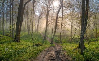 Туманный лес на Стрижаменте Ставропольский край Ставрополье весна Стрижамент рассвет солнце лучи туман лесное растительность хохлатка дерево эко тропа туманный