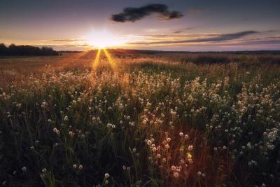 закат в поле..