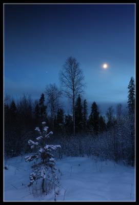 ночь... зима декабрь ночь лес луна