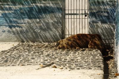 Один день в неволе Зоопарк медведь