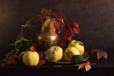 Sunset Quinces quince айва available light autumn colors