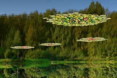 Нереальная реальность озеро отражение осень