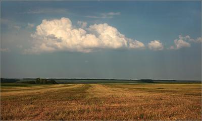 Русское поле.. лето пейзаж поле туча