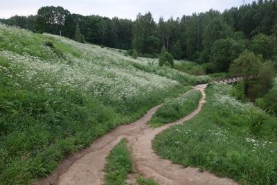 под горку тропа пригорок травы лес