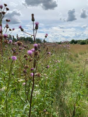 Цветочки в поле
