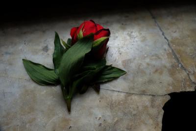 Прекрасное во тьме роза мрачно цветок