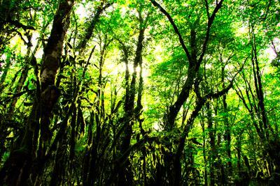 Краснодарские джунгли