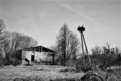Здание с аистами... здание черно-белое весна аисты