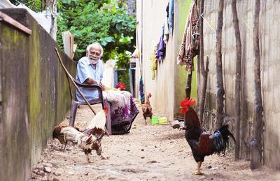 Старик и петухи старик петухи деревня