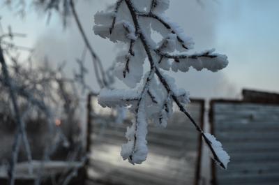 *** зима мороз иней объем