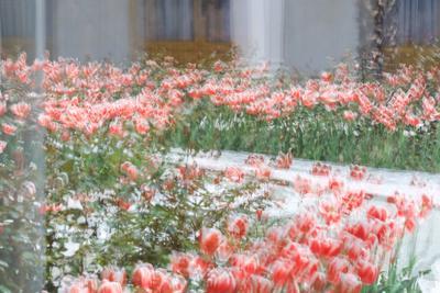 *** цветы дворец двор день весна
